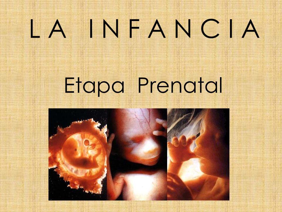 L A I N F A N C I A Etapa Prenatal