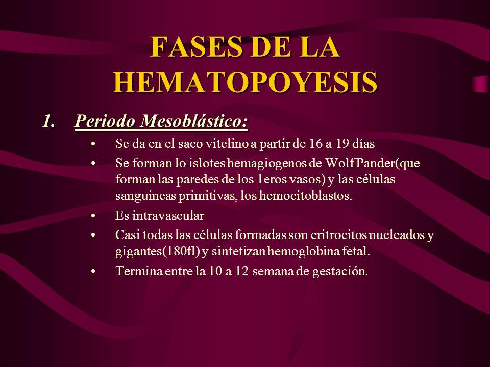 FASES DE LA HEMATOPOYESIS