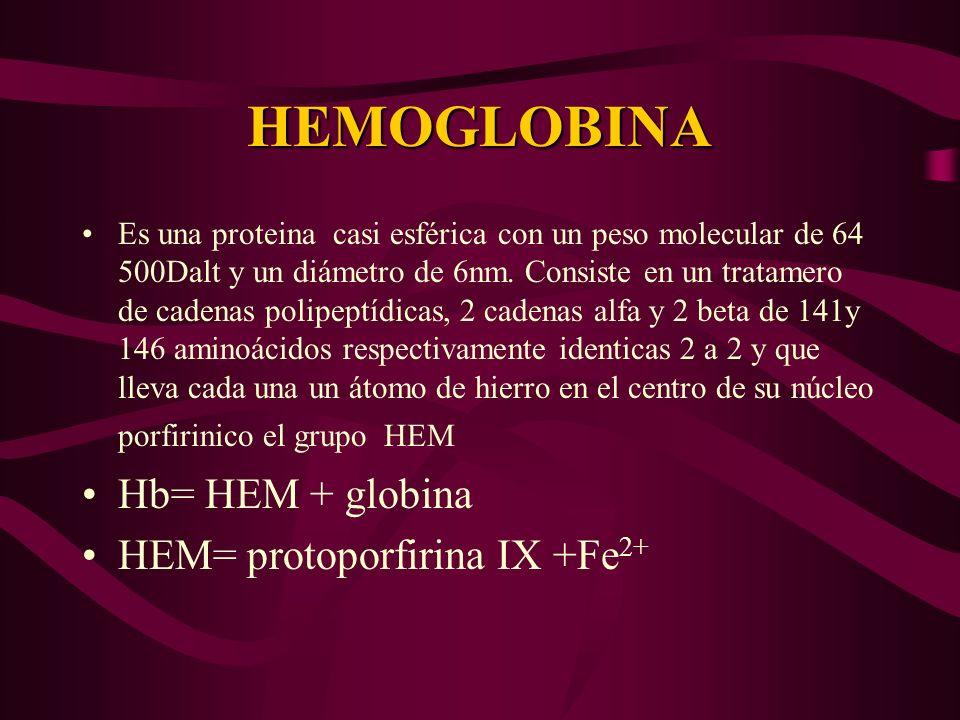 HEMOGLOBINA Hb= HEM + globina HEM= protoporfirina IX +Fe2+