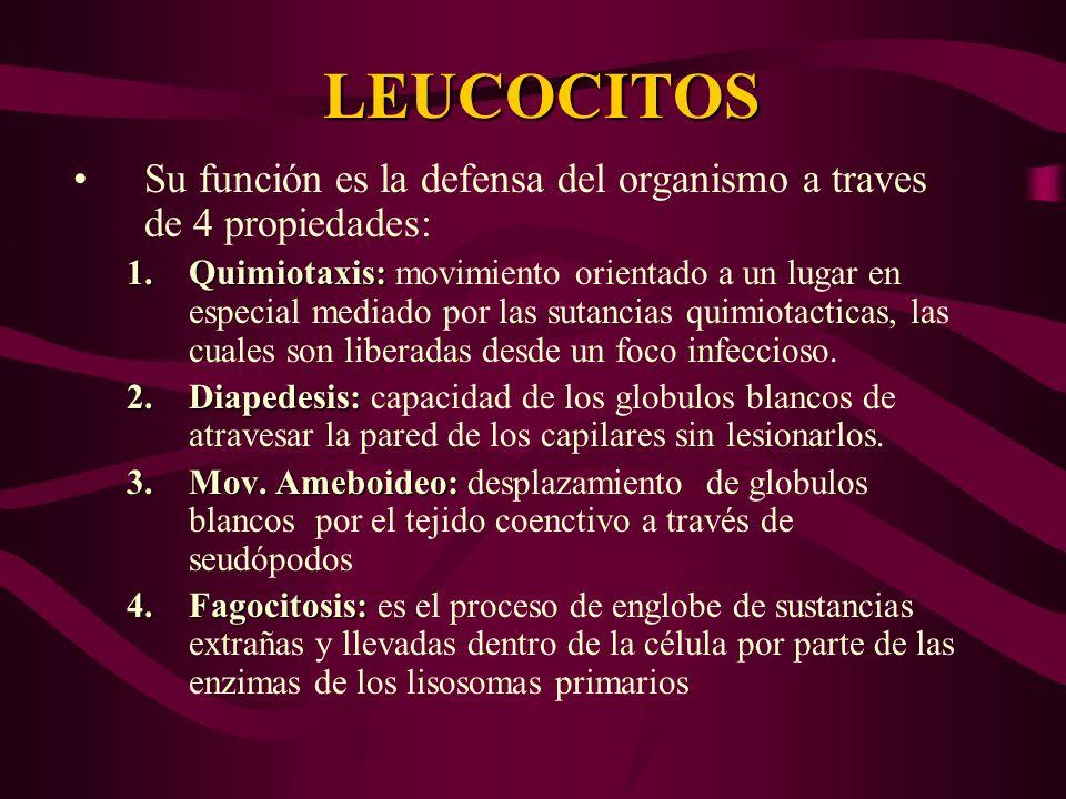 LEUCOCITOS Su función es la defensa del organismo a traves de 4 propiedades:
