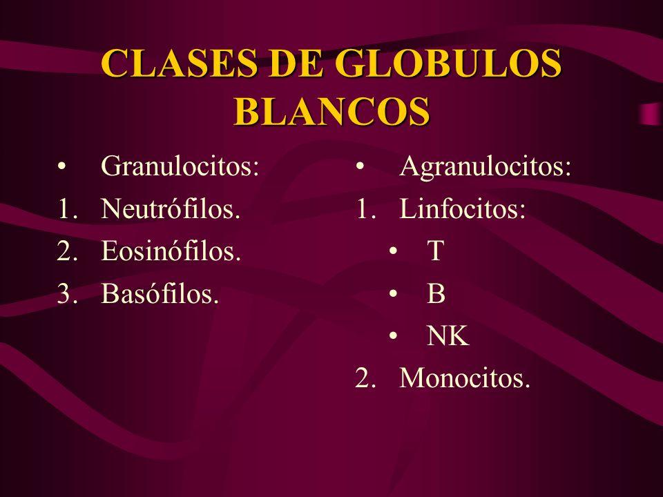 CLASES DE GLOBULOS BLANCOS
