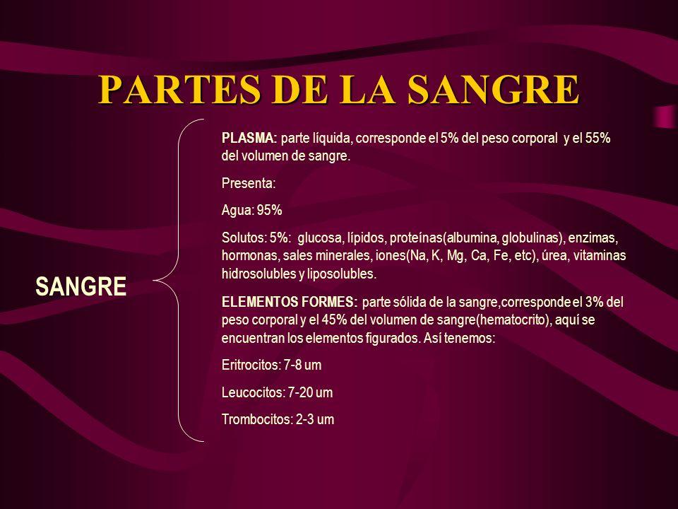 PARTES DE LA SANGRE SANGRE