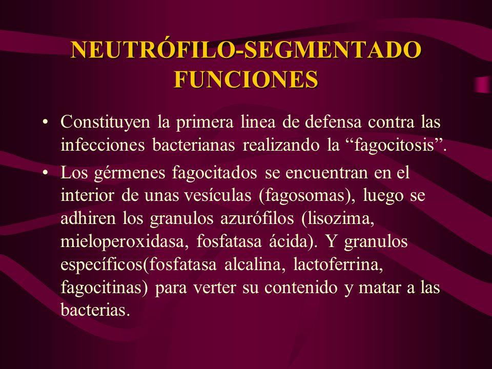 NEUTRÓFILO-SEGMENTADO FUNCIONES