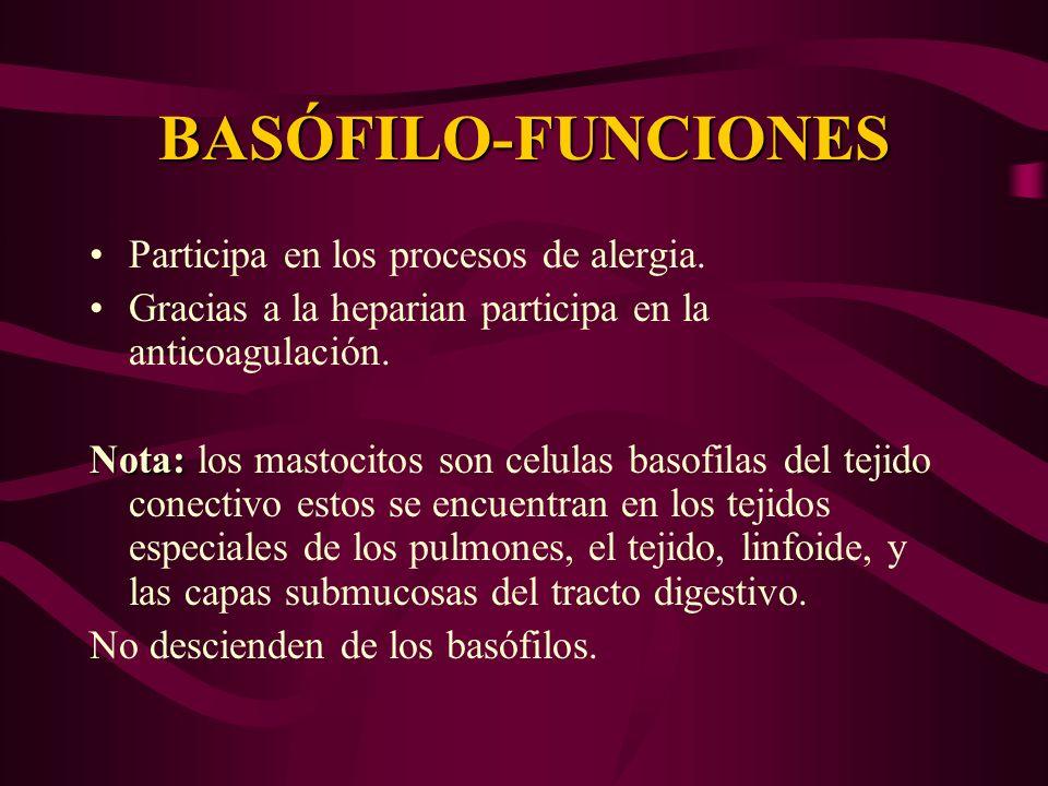 BASÓFILO-FUNCIONES Participa en los procesos de alergia.