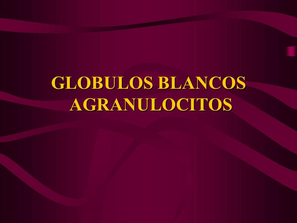 GLOBULOS BLANCOS AGRANULOCITOS
