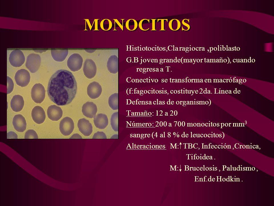 MONOCITOS Histiotocitos,Cla ragiocra ,poliblasto