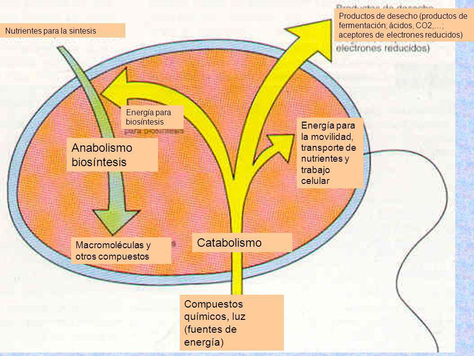 Anabolismo biosíntesis