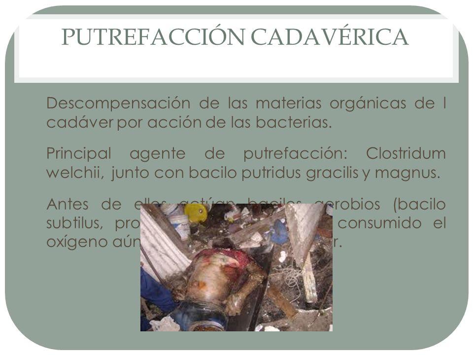 PUTREFACCIÓN CADAVÉRICA
