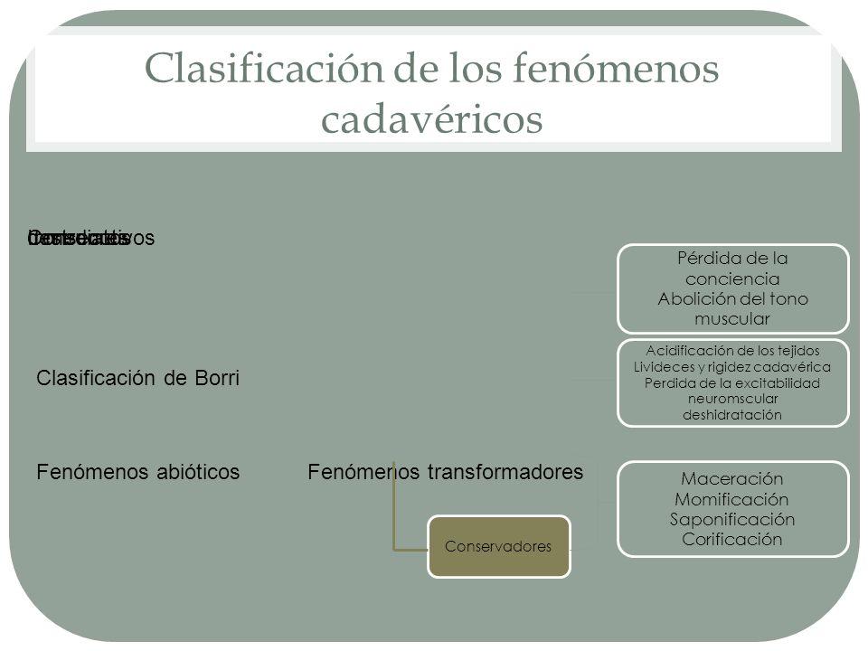 Clasificación de los fenómenos cadavéricos