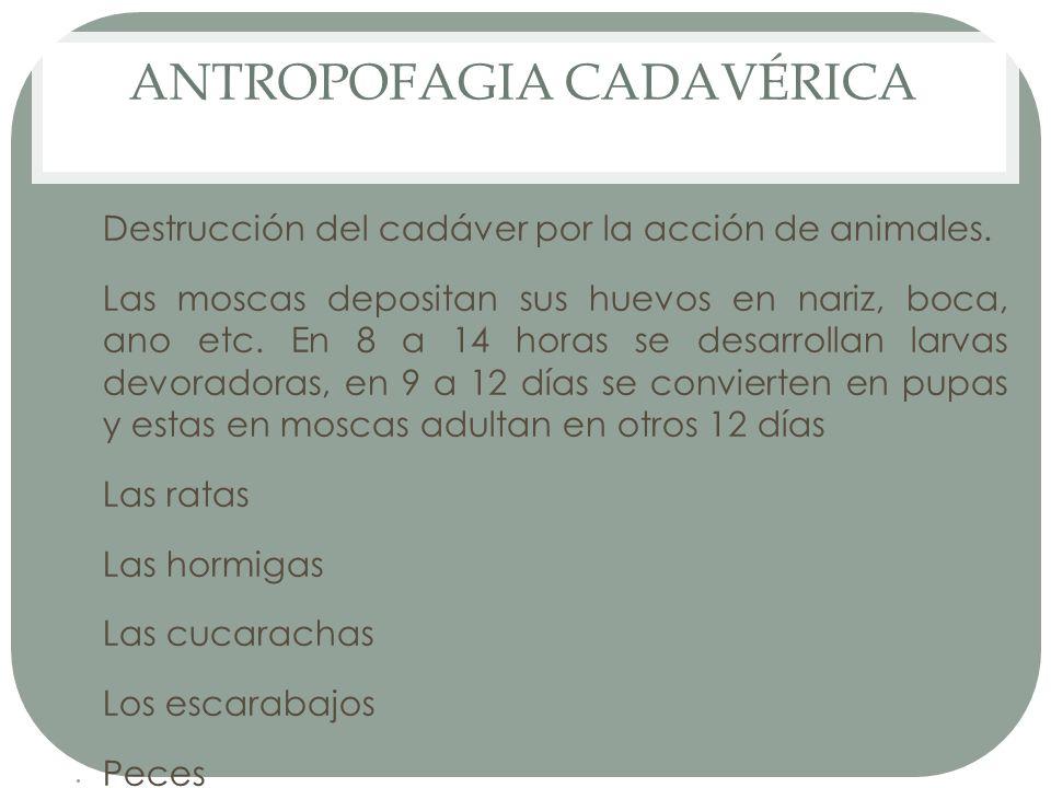 ANTROPOFAGIA CADAVÉRICA