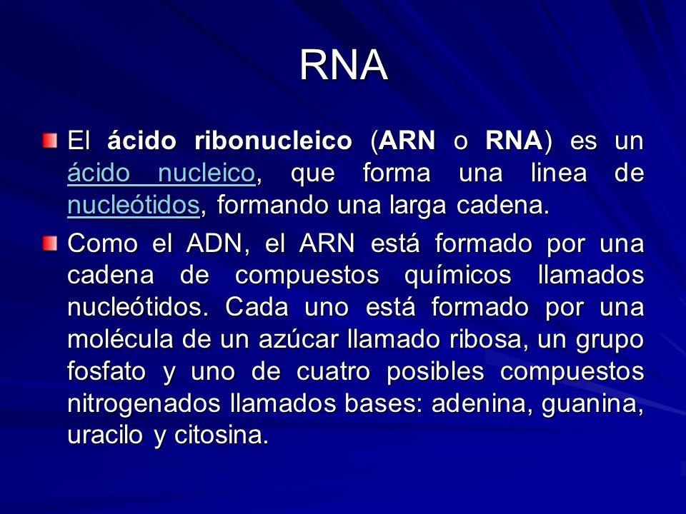 RNA El ácido ribonucleico (ARN o RNA) es un ácido nucleico, que forma una linea de nucleótidos, formando una larga cadena.