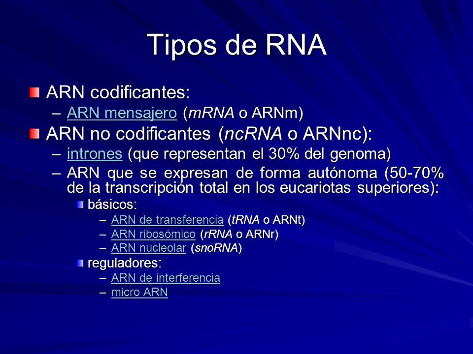 Tipos de RNA ARN codificantes: ARN no codificantes (ncRNA o ARNnc):