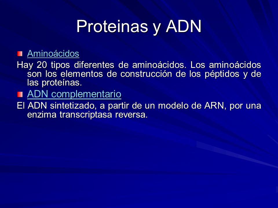 Proteinas y ADN ADN complementario Aminoácidos