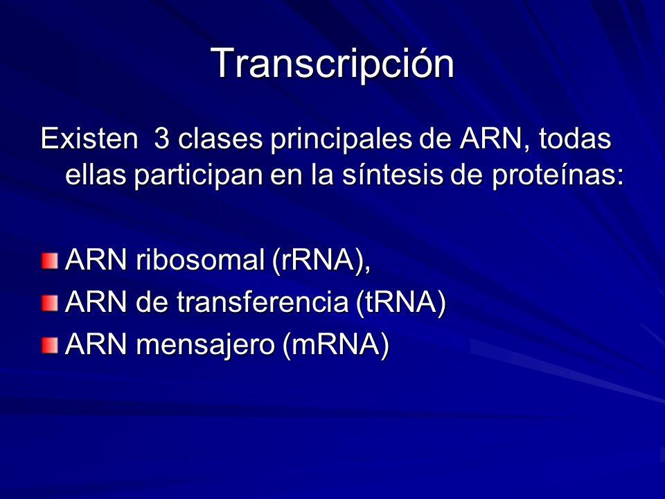 Transcripción Existen 3 clases principales de ARN, todas ellas participan en la síntesis de proteínas: