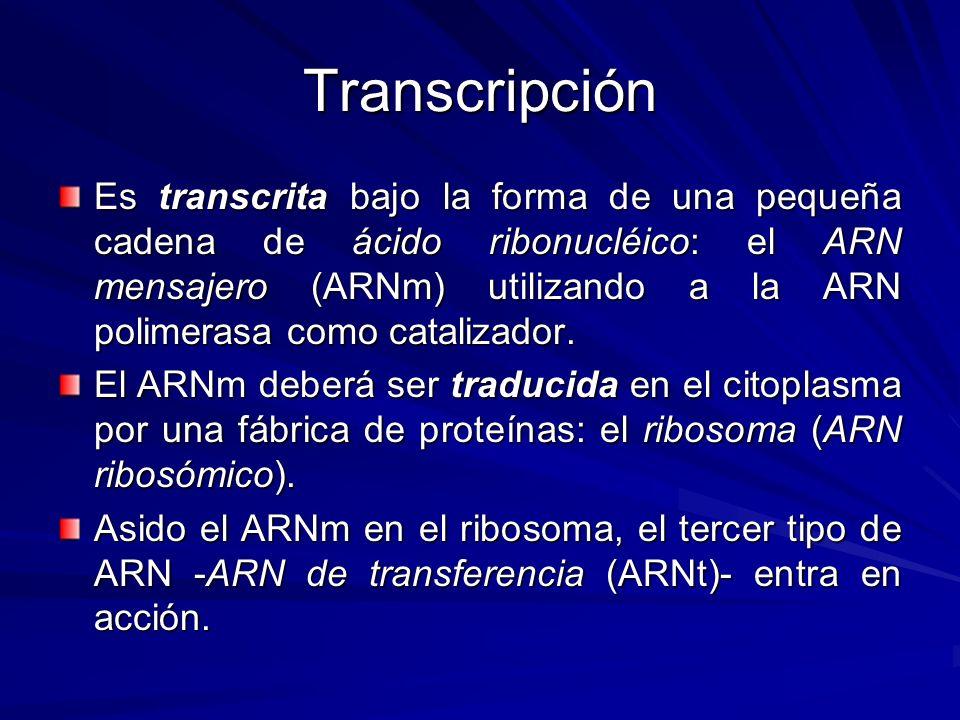 Transcripción