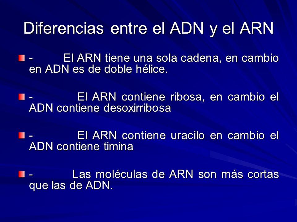 Diferencias entre el ADN y el ARN