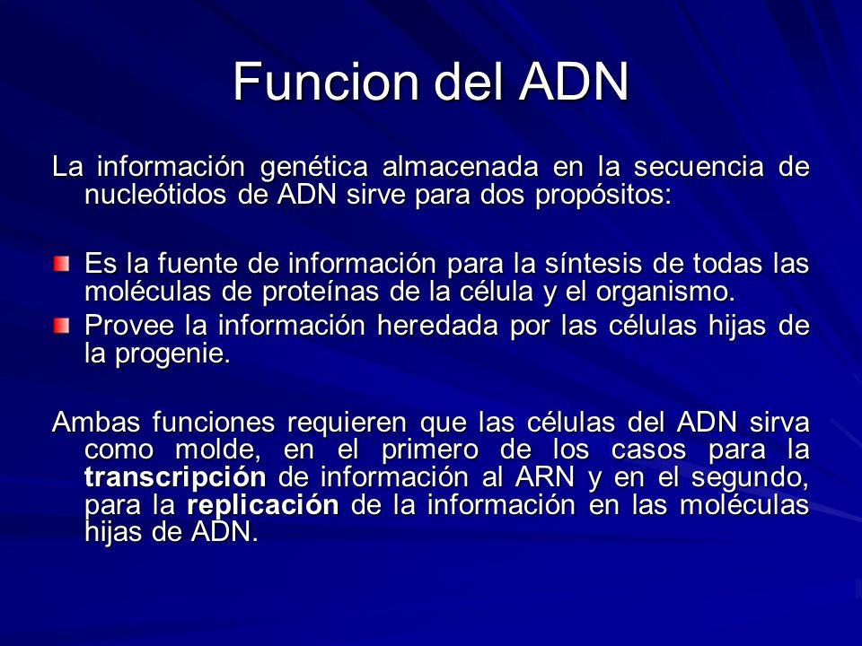 Funcion del ADN La información genética almacenada en la secuencia de nucleótidos de ADN sirve para dos propósitos: