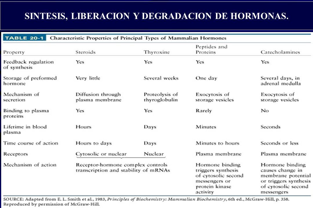 SINTESIS, LIBERACION Y DEGRADACION DE HORMONAS.