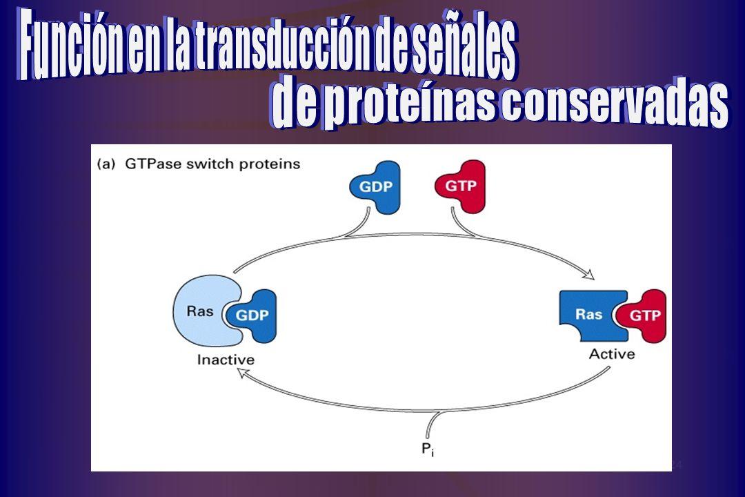 Función en la transducción de señales de proteínas conservadas