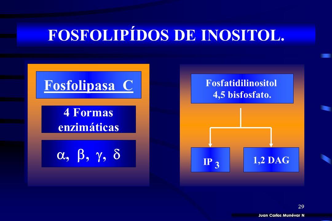 FOSFOLIPÍDOS DE INOSITOL.