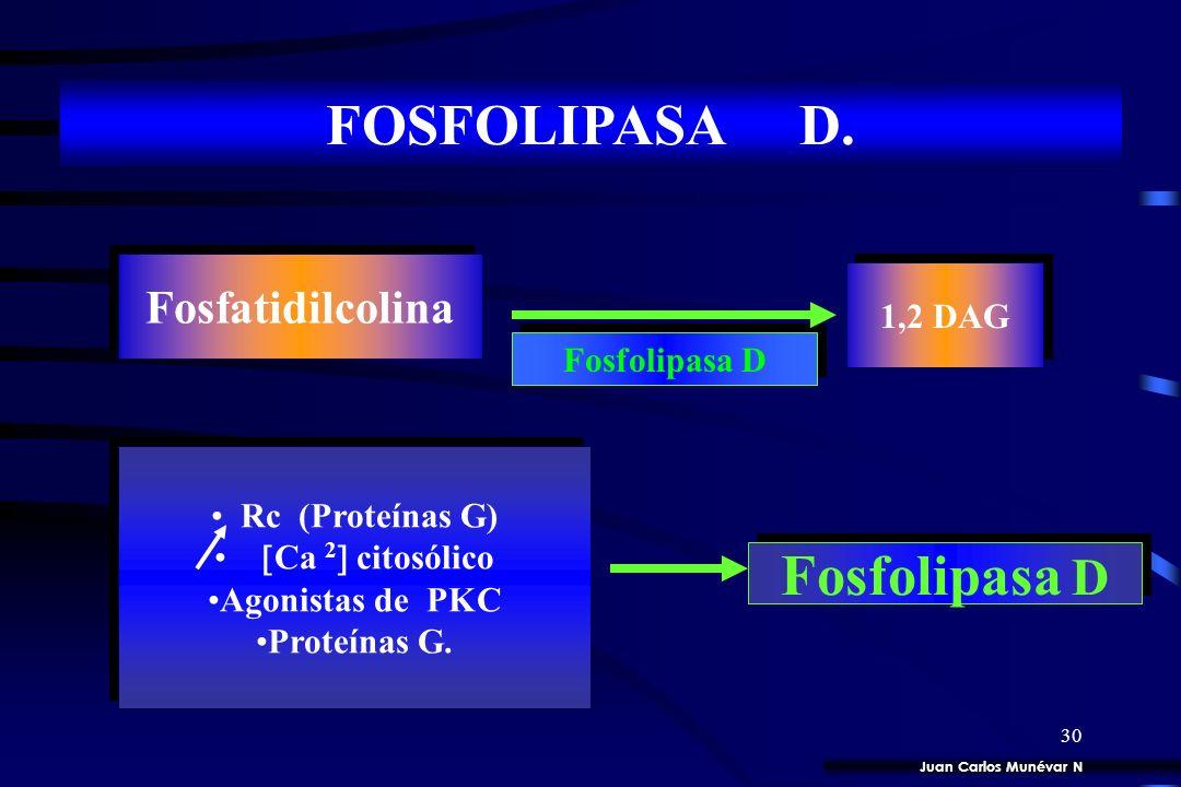 FOSFOLIPASA D. Fosfatidilcolina 1,2 DAG Fosfolipasa D Rc (Proteínas G)