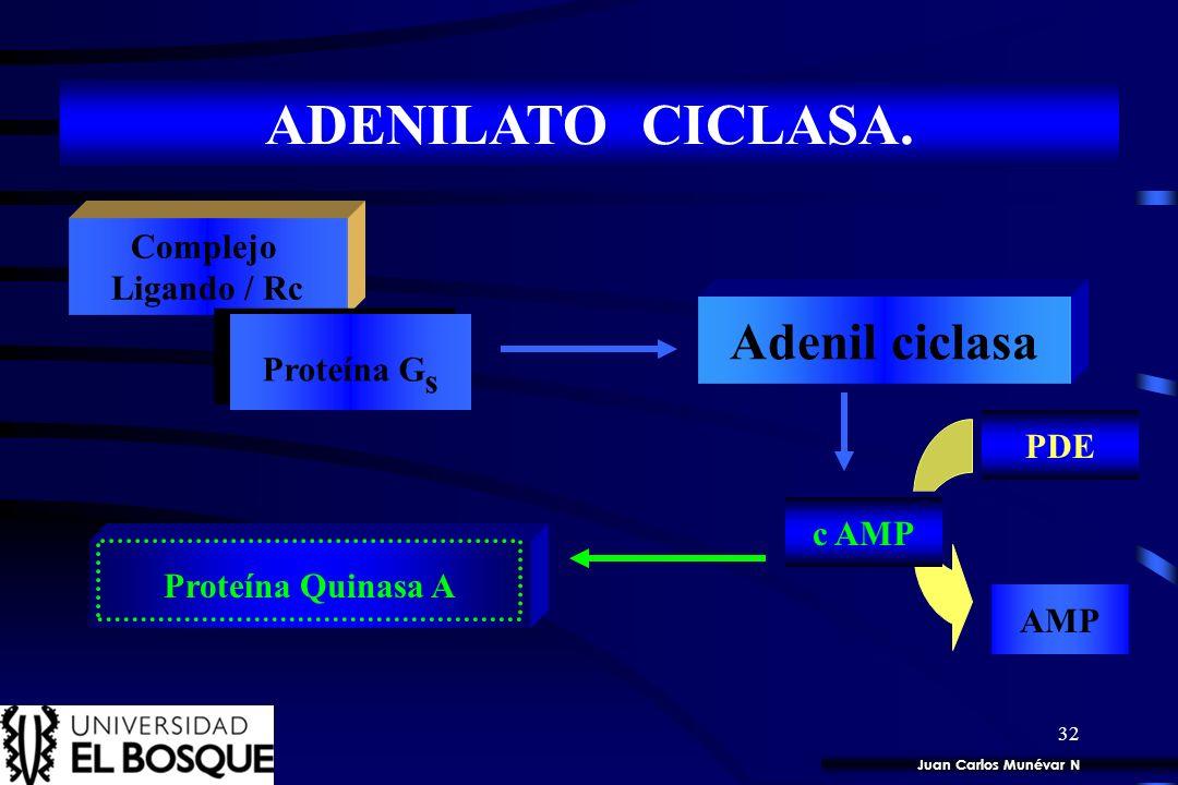 ADENILATO CICLASA. Adenil ciclasa Complejo Ligando / Rc Proteína Gs