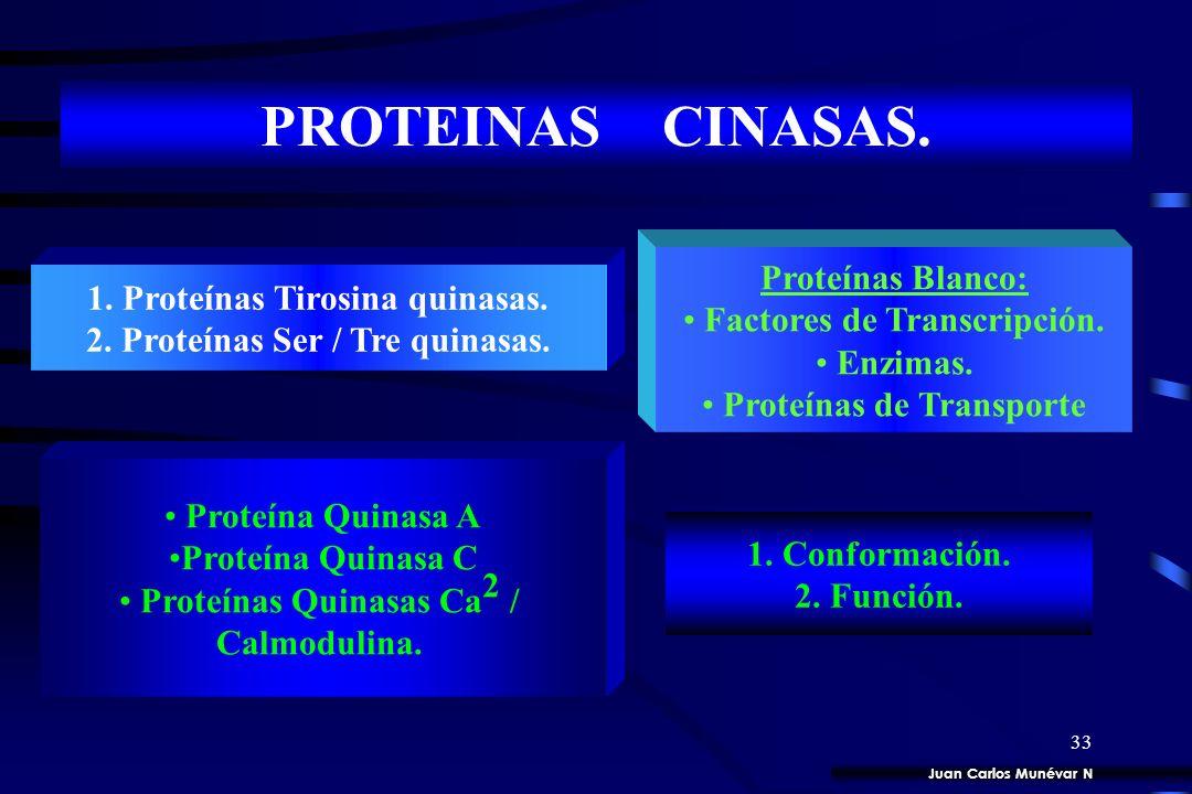 PROTEINAS CINASAS. Proteínas Blanco: 1. Proteínas Tirosina quinasas.
