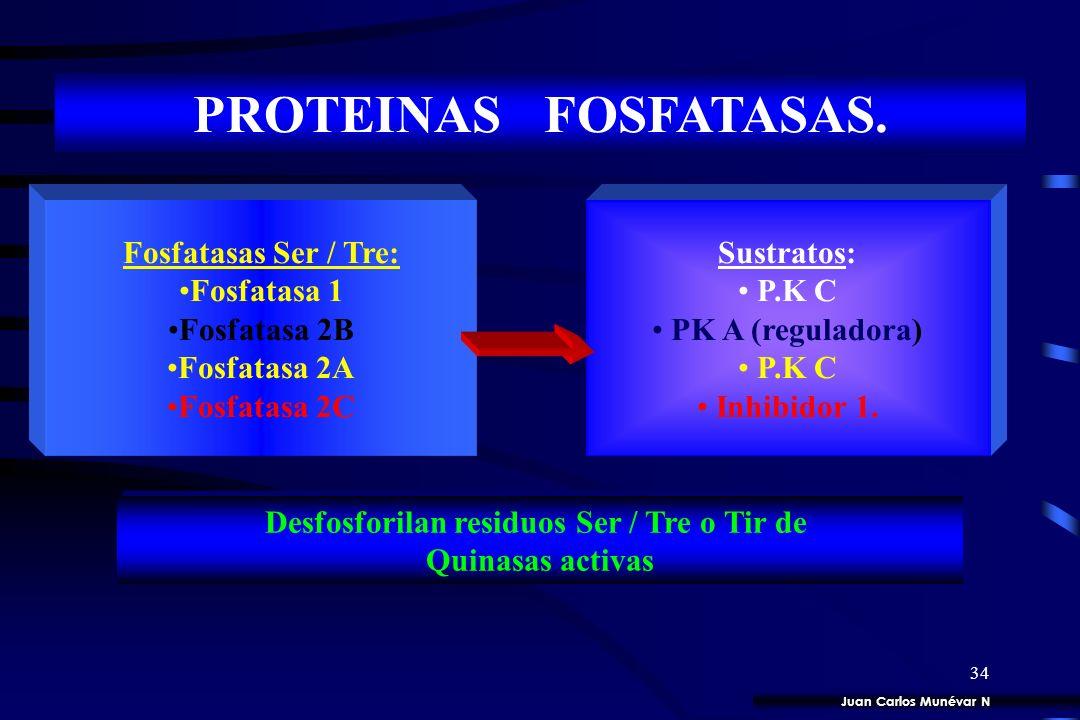 Desfosforilan residuos Ser / Tre o Tir de
