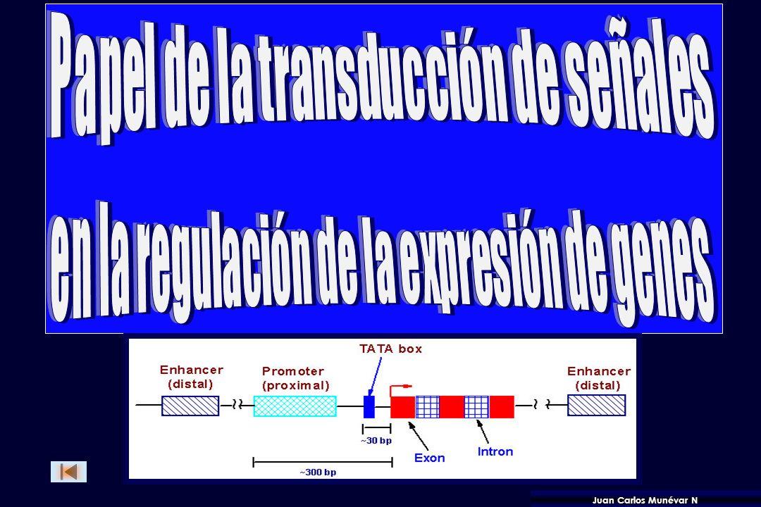 Papel de la transducción de señales