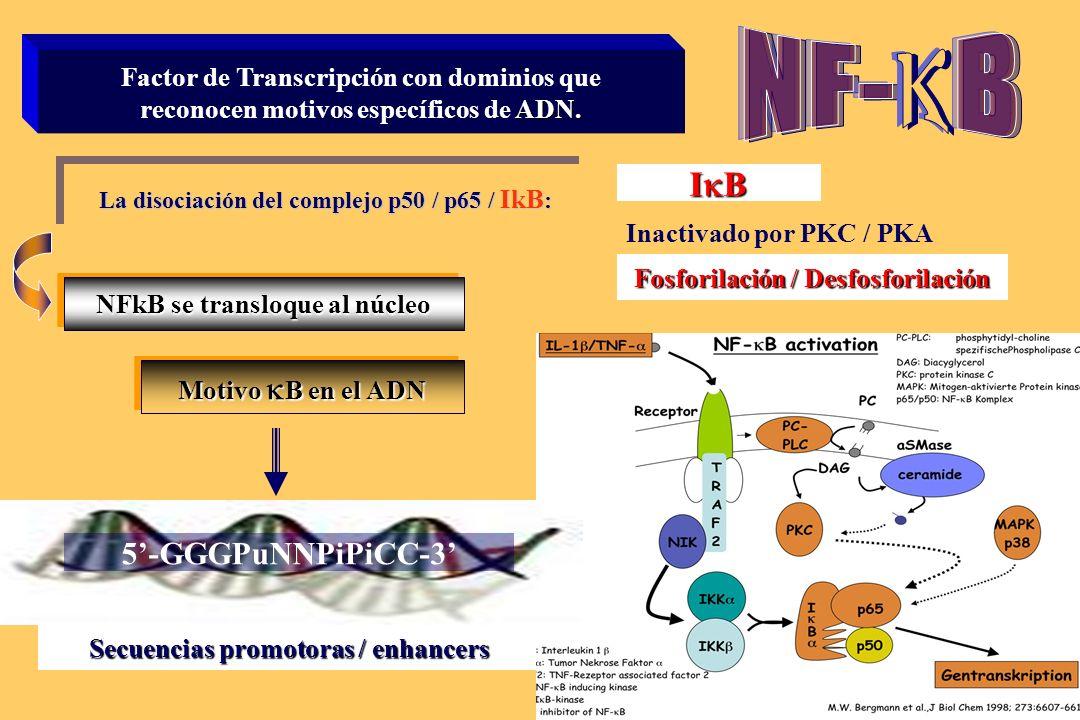 k NF- B IkB 5'-GGGPuNNPiPiCC-3'
