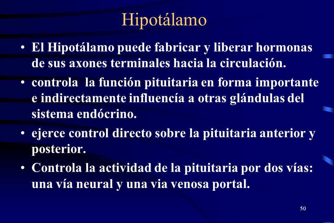 Hipotálamo El Hipotálamo puede fabricar y liberar hormonas de sus axones terminales hacia la circulación.