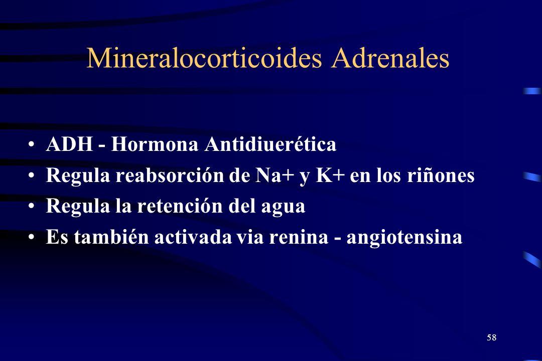 Mineralocorticoides Adrenales