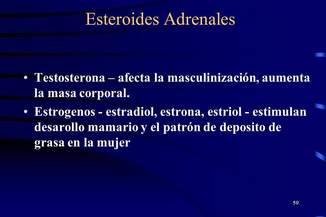 Esteroides Adrenales Testosterona – afecta la masculinización, aumenta la masa corporal.