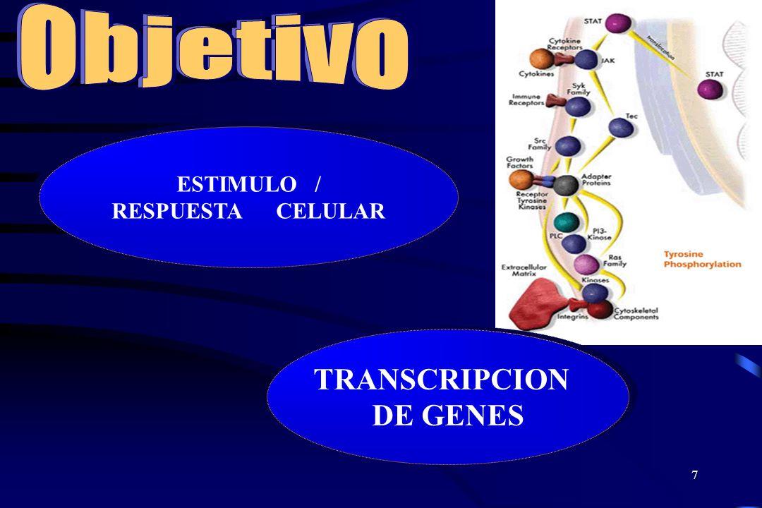 Objetivo ESTIMULO / RESPUESTA CELULAR TRANSCRIPCION DE GENES