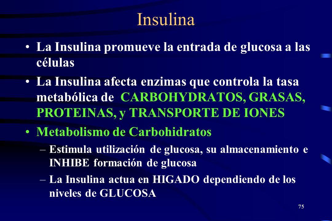 Insulina La Insulina promueve la entrada de glucosa a las células