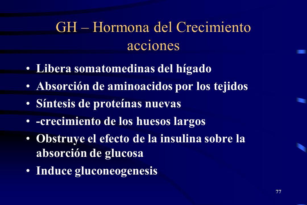 GH – Hormona del Crecimiento acciones