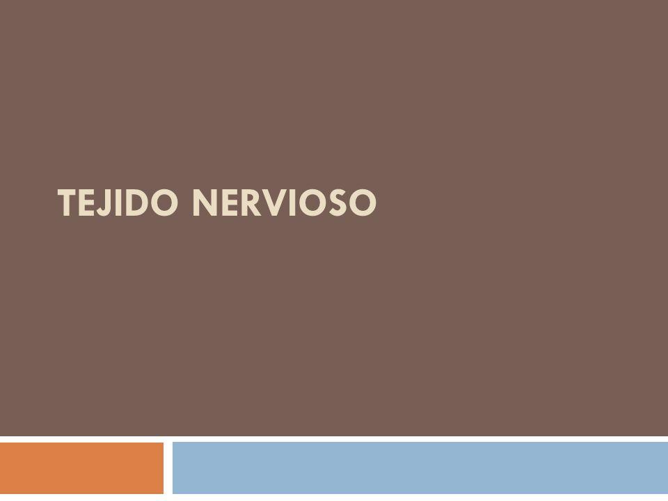 Tejido Nervioso