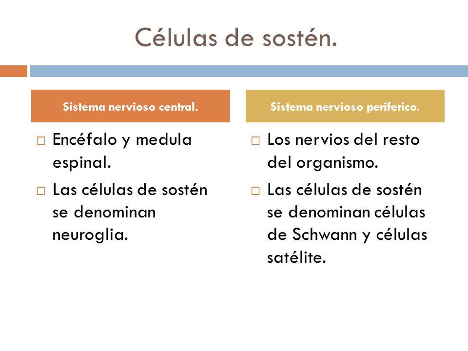 Sistema nervioso central. Sistema nervioso periferico.