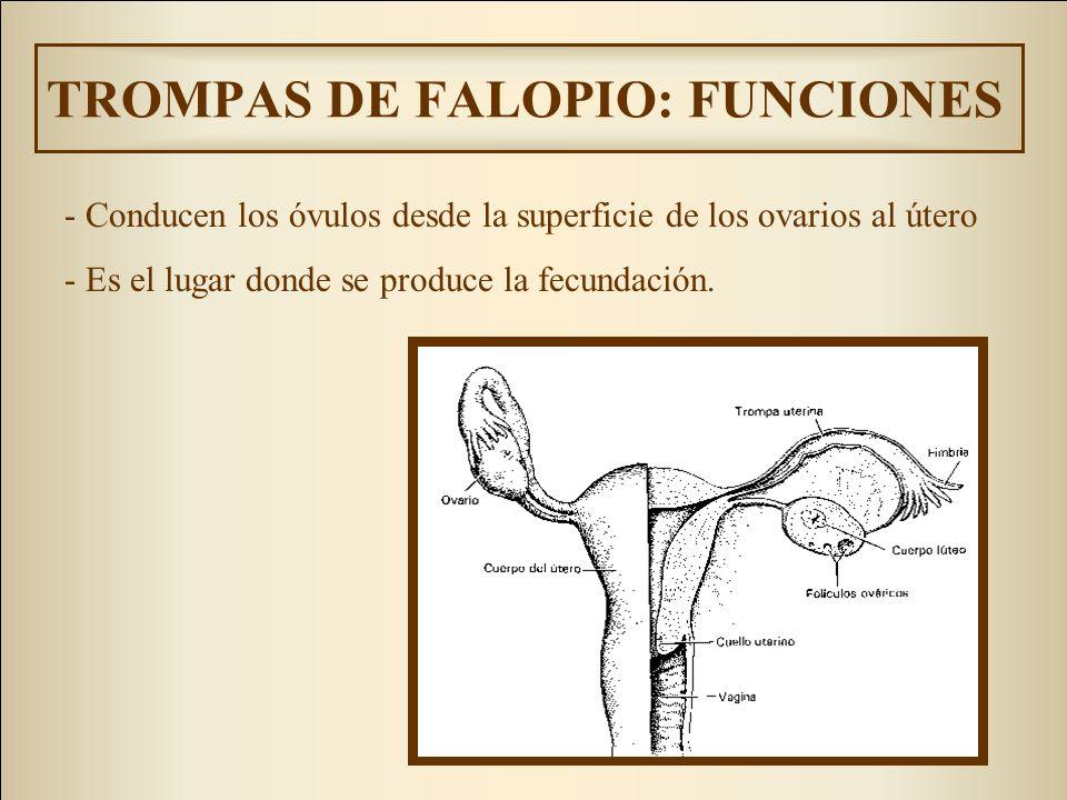 TROMPAS DE FALOPIO: FUNCIONES