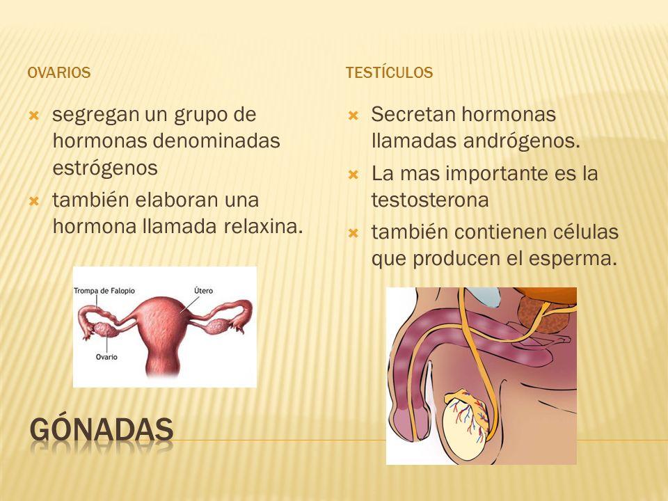 Gónadas segregan un grupo de hormonas denominadas estrógenos