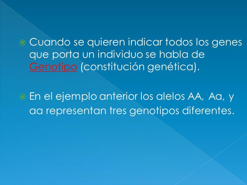 Cuando se quieren indicar todos los genes que porta un individuo se habla de Genotipo (constitución genética).