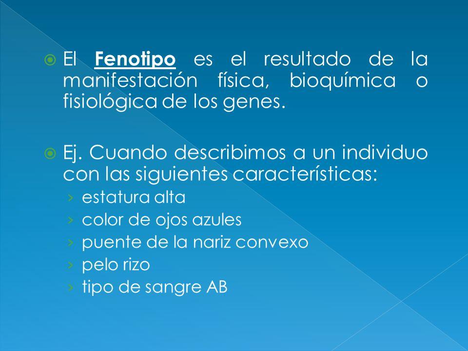 El Fenotipo es el resultado de la manifestación física, bioquímica o fisiológica de los genes.