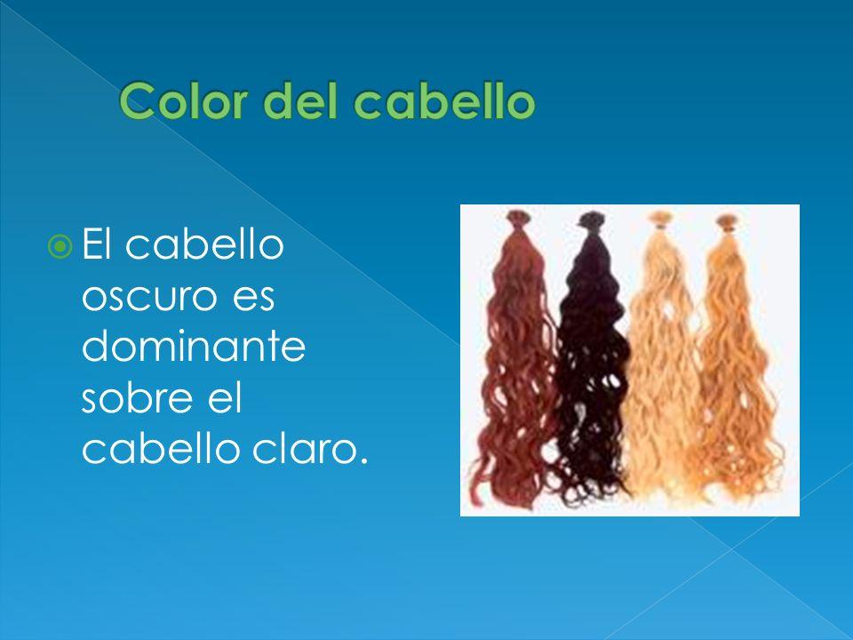 Color del cabello El cabello oscuro es dominante sobre el cabello claro.