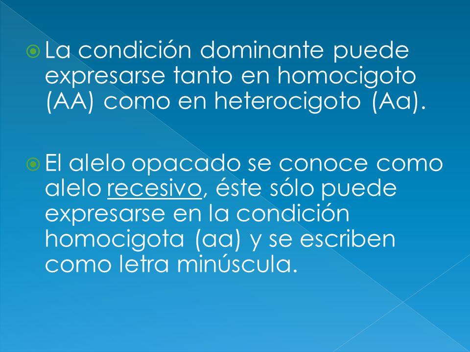 La condición dominante puede expresarse tanto en homocigoto (AA) como en heterocigoto (Aa).