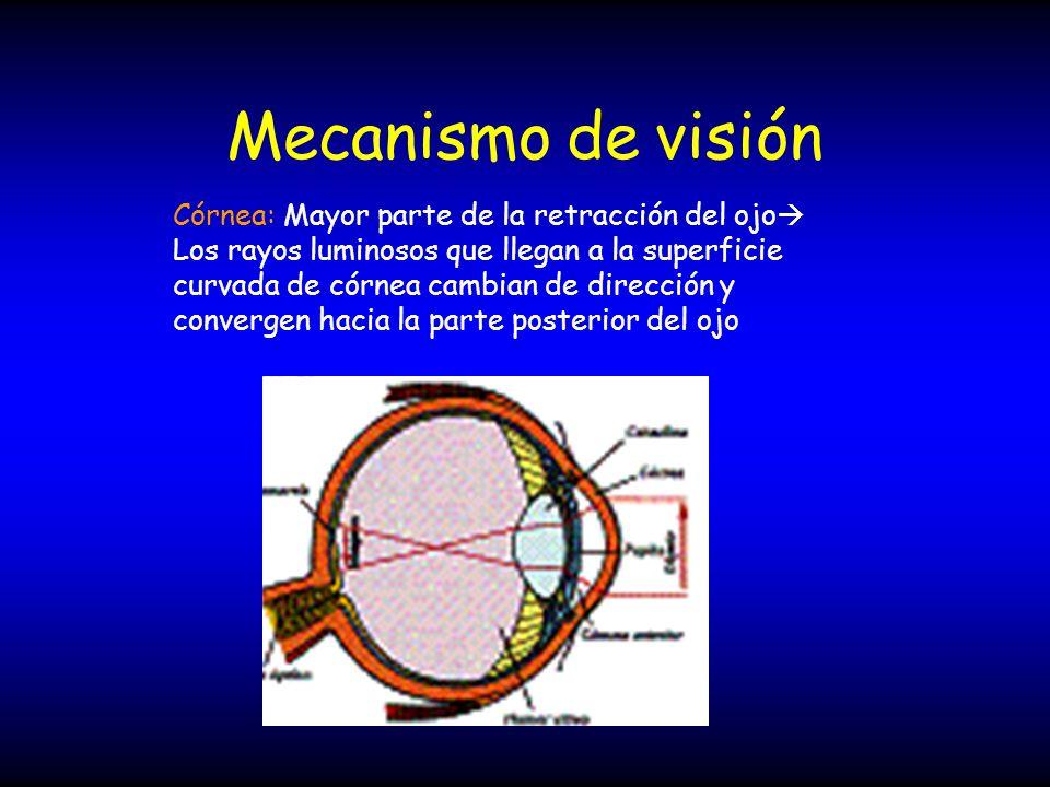 Mecanismo de visión