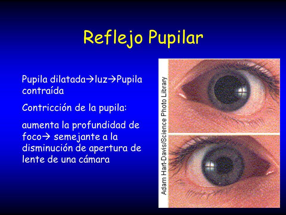 Reflejo Pupilar Pupila dilatadaluzPupila contraída