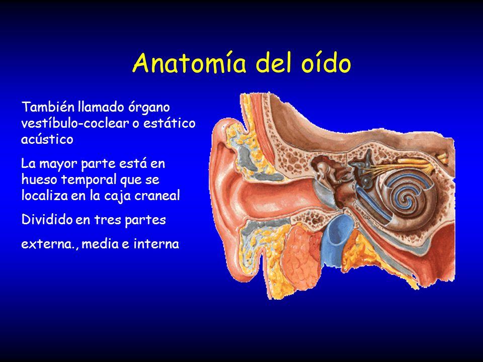 Anatomía del oído También llamado órgano vestíbulo-coclear o estático acústico.
