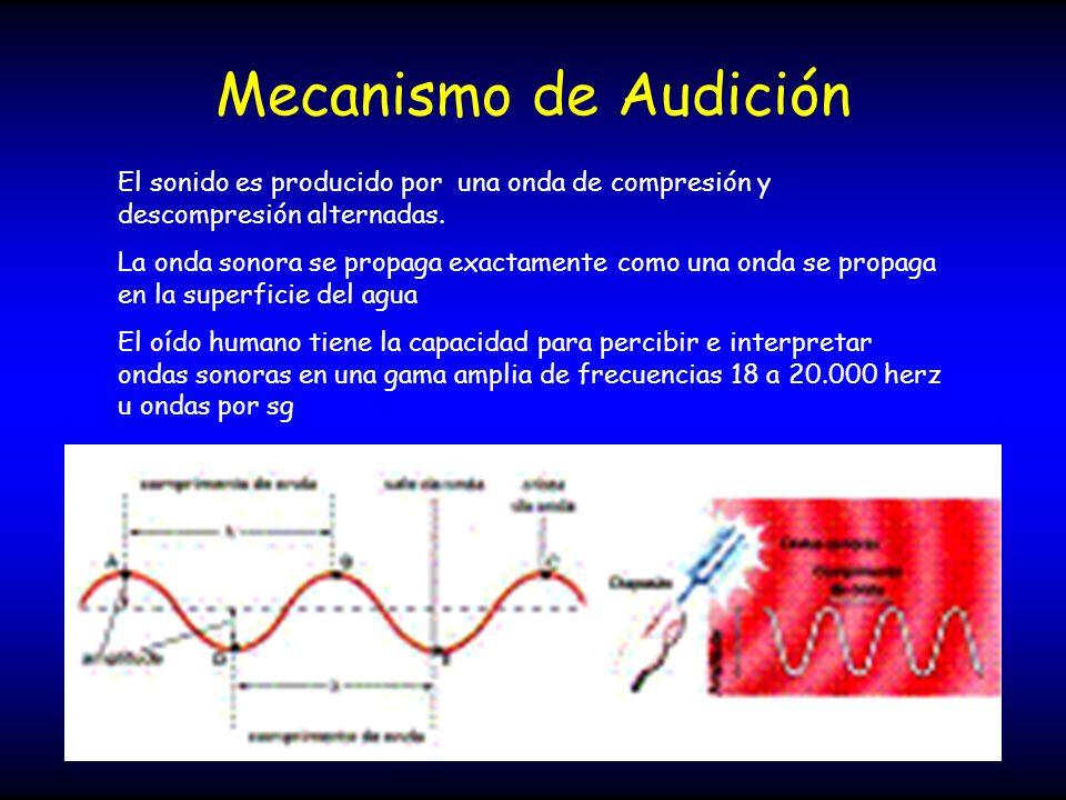 Mecanismo de Audición El sonido es producido por una onda de compresión y descompresión alternadas.