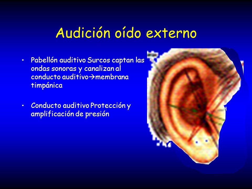 Audición oído externo Pabellón auditivo Surcos captan las ondas sonoras y canalizan al conducto auditivomembrana timpánica.