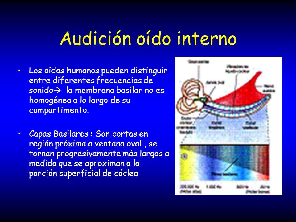 Audición oído interno